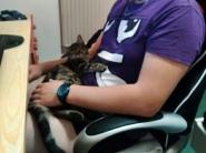 Shira ima novo ljubezen